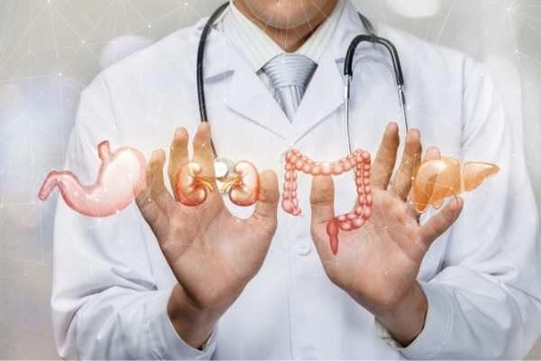 Ultralyd undersøkelse Indre organer